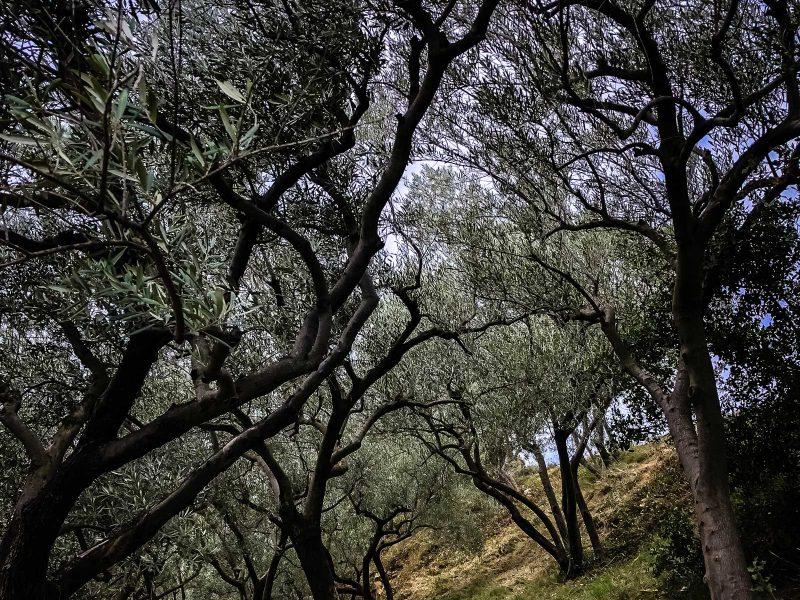 oliviers2